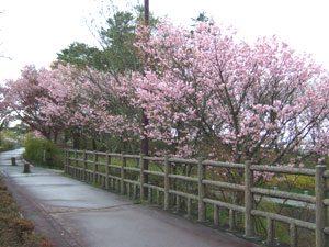 旭日丘緑地公園付近