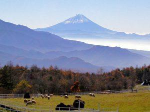 県営八ケ岳牧場からの富士