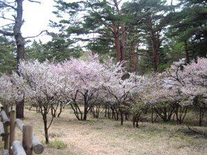 富士山吉田口登山道 中の茶屋周辺