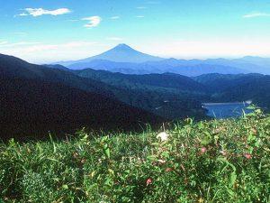 大菩薩嶺からの富士