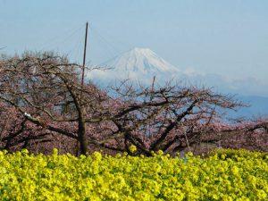 新府からの富士