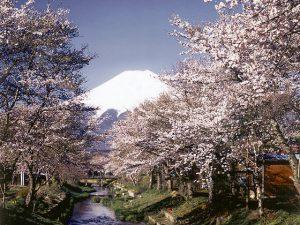 忍野八海付近からの富士