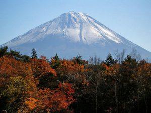 野鳥の森公園からの富士