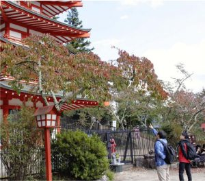 桜の樹勢などを確認する日本花の会の研究員ら=富士吉田・新倉山浅間公園
