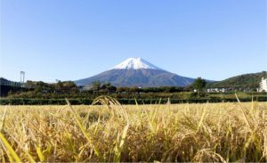 「初雪化粧」が宣言された富士山=富士吉田市上吉田