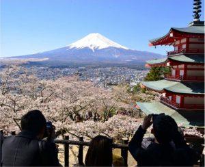 満開となったソメイヨシノと富士山、五重塔を撮影する観光客(4月13日)=富士吉田・新倉山浅間公園