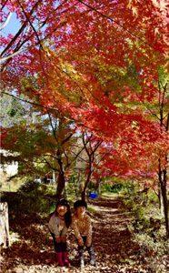 里山、秋映える