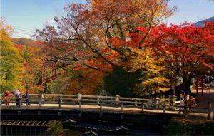 猿橋周辺で見頃を迎えている紅葉=大月市猿橋町猿橋