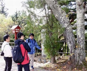昨年10月、桜の樹勢などを確認する日本花の会の研究員ら。集まった資金は桜の保護活動に使われる=富士吉田・新倉山浅間公園
