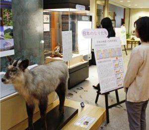 日本の山の特徴、動物や植物紹介