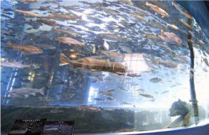 さかな公園内にある県立富士湧水の里水族館