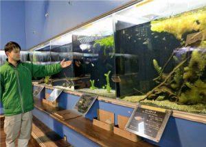 さまざまな生き物が並ぶ特別展=忍野・県立富士湧水の里水族館