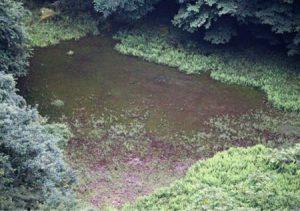 長雨の影響で出現した「赤池」=富士河口湖町精進