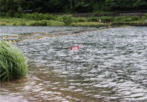 水位が上昇している西湖=富士河口湖町西湖