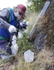 外来植物を除去する参加者=富士山5合目