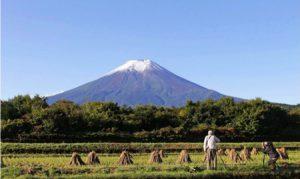 「初冠雪」が観測された富士山=富士吉田市内