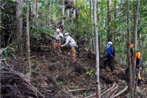 山林を整備する「森の学校」の受講生ら=都留市川棚