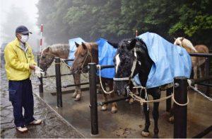 富士山で客を待つ馬たち=富士山5合目